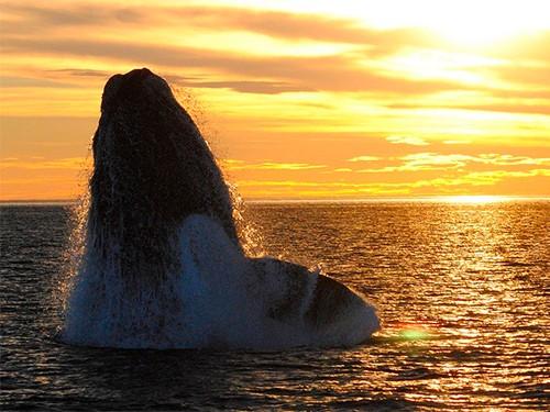 Viajes Puerto Madryn 3 noches promo 3x2 Hotel La Posada - Junio