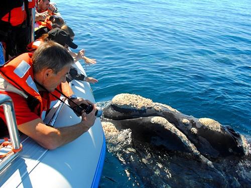 Viajes Puerto Madryn c/Avistaje de Ballenas promo 4x3 - Sep a Dic.