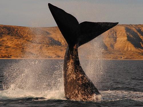 Viajes Puerto Madryn 3 noches promo 3x2 C/Exc. Peninsula - Junio